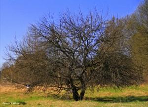 Klätterträdet