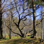 Rågsveds grönområde